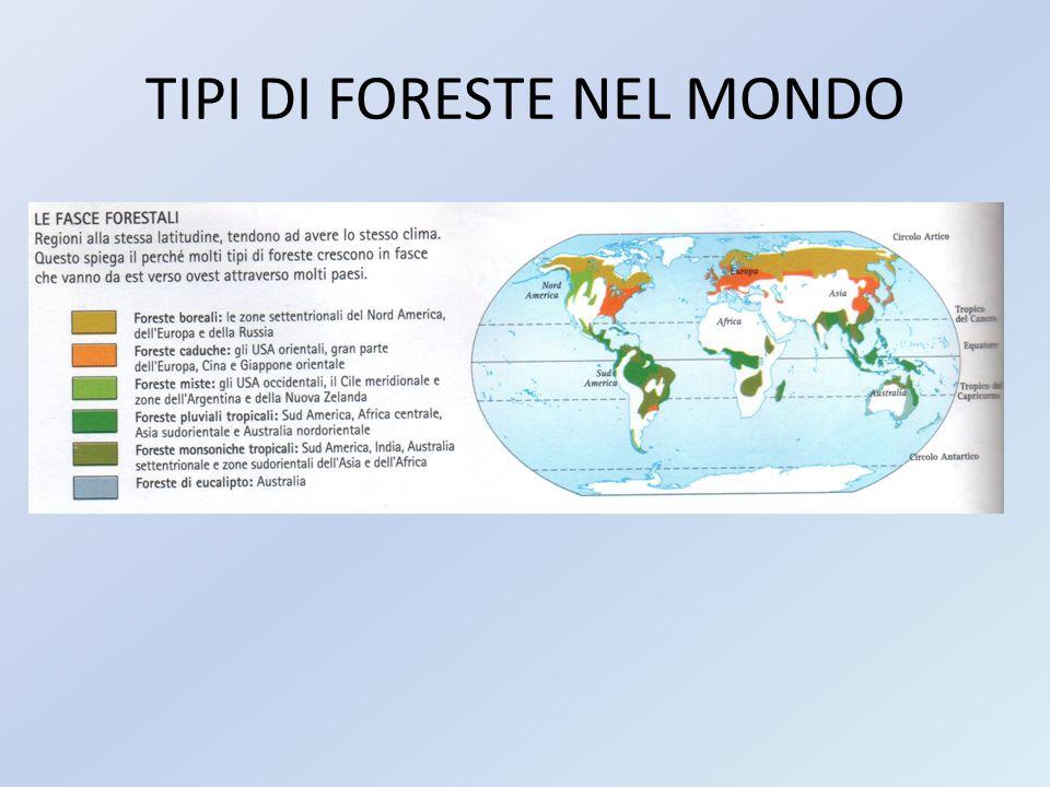TIPI DI FORESTE NEL MONDO
