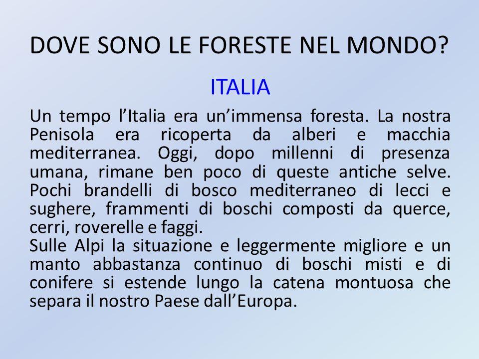 DOVE SONO LE FORESTE NEL MONDO? ITALIA Un tempo l'Italia era un'immensa foresta. La nostra Penisola era ricoperta da alberi e macchia mediterranea. Og