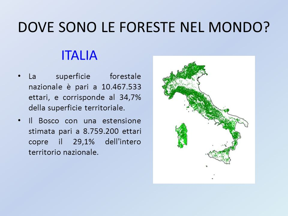 DOVE SONO LE FORESTE NEL MONDO? ITALIA La superficie forestale nazionale è pari a 10.467.533 ettari, e corrisponde al 34,7% della superficie territori