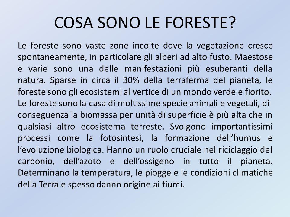 COSA SONO LE FORESTE? Le foreste sono vaste zone incolte dove la vegetazione cresce spontaneamente, in particolare gli alberi ad alto fusto. Maestose