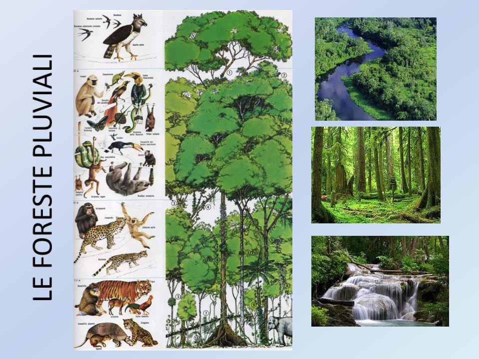 DIFFERENZA TRA FORESTE ARTIFICIALI E FORESTE NATURALI Il respiro degli alberi non basta a depurare il pianeta allora l uomo prova a intervenire costruendo foreste artificiali.