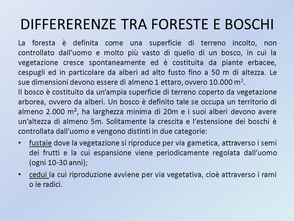 DIFFERERENZE TRA FORESTE E BOSCHI La foresta è definita come una superficie di terreno incolto, non controllato dall'uomo e molto più vasto di quello