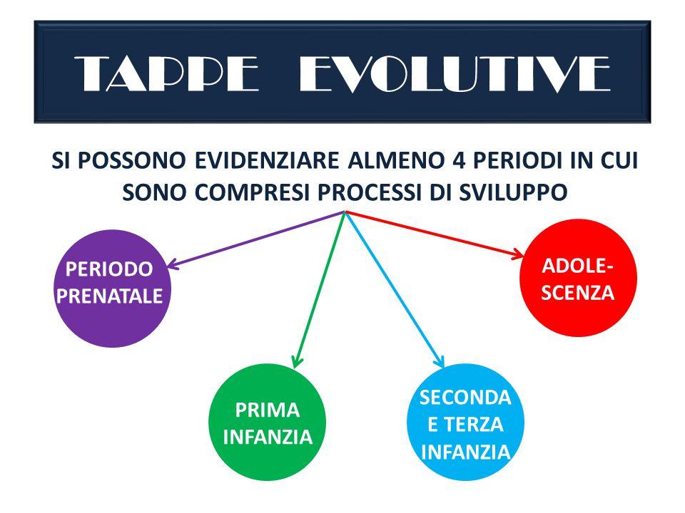 TAPPE EVOLUTIVE SI POSSONO EVIDENZIARE ALMENO 4 PERIODI IN CUI SONO COMPRESI PROCESSI DI SVILUPPO PERIODO PRENATALE PRIMA INFANZIA SECONDA E TERZA INFANZIA ADOLE- SCENZA