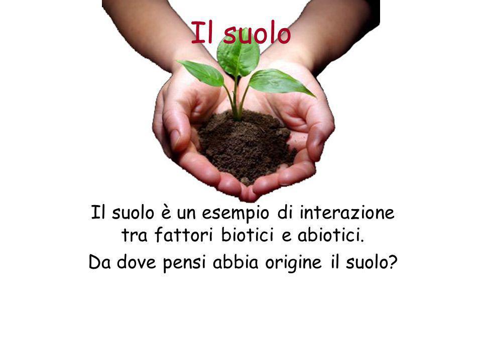 Il suolo Il suolo è un esempio di interazione tra fattori biotici e abiotici. Da dove pensi abbia origine il suolo?