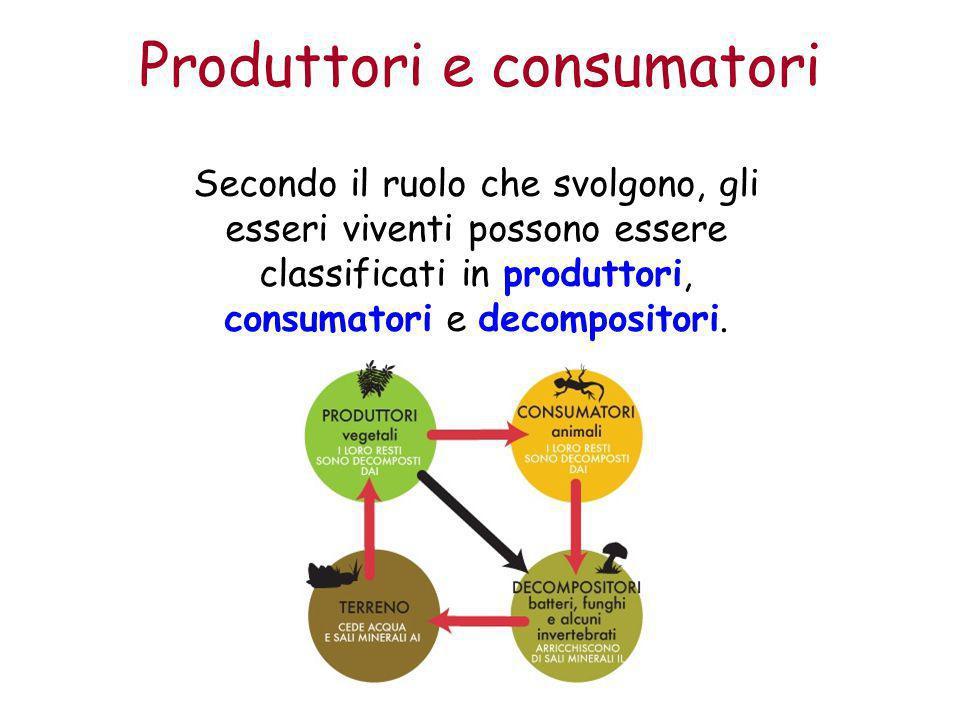 Produttori e consumatori Secondo il ruolo che svolgono, gli esseri viventi possono essere classificati in produttori, consumatori e decompositori.