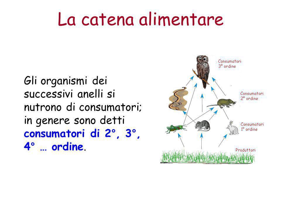 La catena alimentare Gli organismi dei successivi anelli si nutrono di consumatori; in genere sono detti consumatori di 2°, 3°, 4° … ordine.
