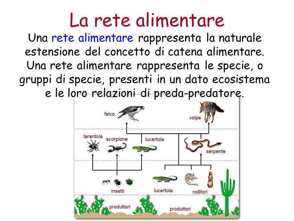 La rete alimentare Una rete alimentare rappresenta la naturale estensione del concetto di catena alimentare. Una rete alimentare rappresenta le specie