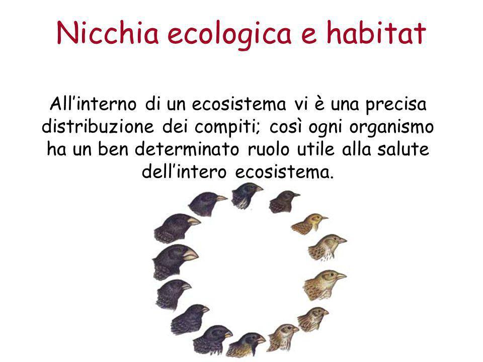 Nicchia ecologica e habitat All'interno di un ecosistema vi è una precisa distribuzione dei compiti; così ogni organismo ha un ben determinato ruolo u