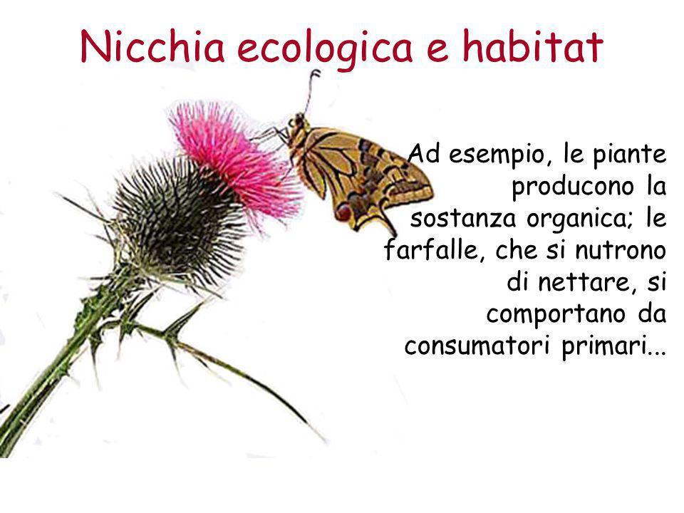 Nicchia ecologica e habitat Ad esempio, le piante producono la sostanza organica; le farfalle, che si nutrono di nettare, si comportano da consumatori