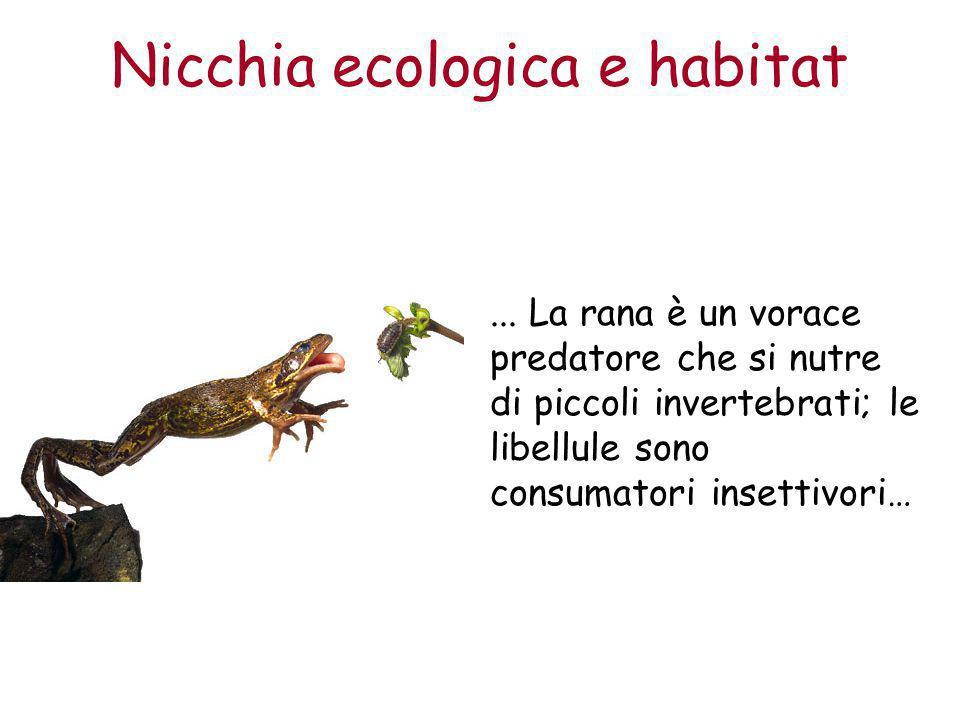 Nicchia ecologica e habitat... La rana è un vorace predatore che si nutre di piccoli invertebrati; le libellule sono consumatori insettivori…