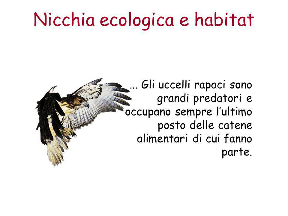 Nicchia ecologica e habitat... Gli uccelli rapaci sono grandi predatori e occupano sempre l'ultimo posto delle catene alimentari di cui fanno parte.