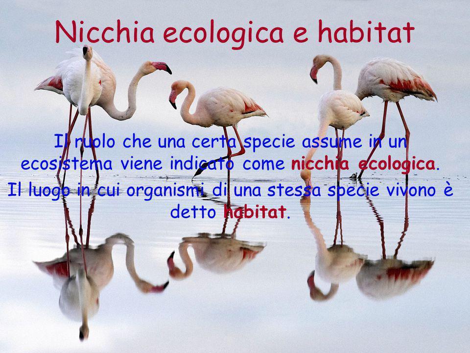 Nicchia ecologica e habitat Il ruolo che una certa specie assume in un ecosistema viene indicato come nicchia ecologica. Il luogo in cui organismi di