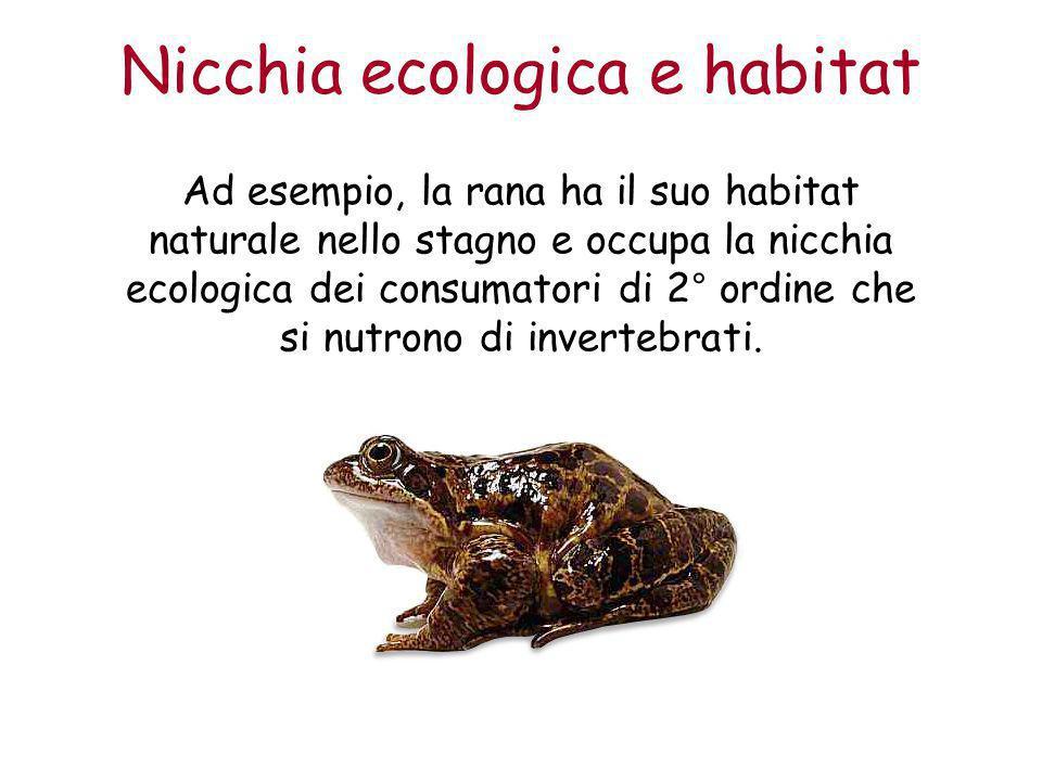 Nicchia ecologica e habitat Ad esempio, la rana ha il suo habitat naturale nello stagno e occupa la nicchia ecologica dei consumatori di 2° ordine che