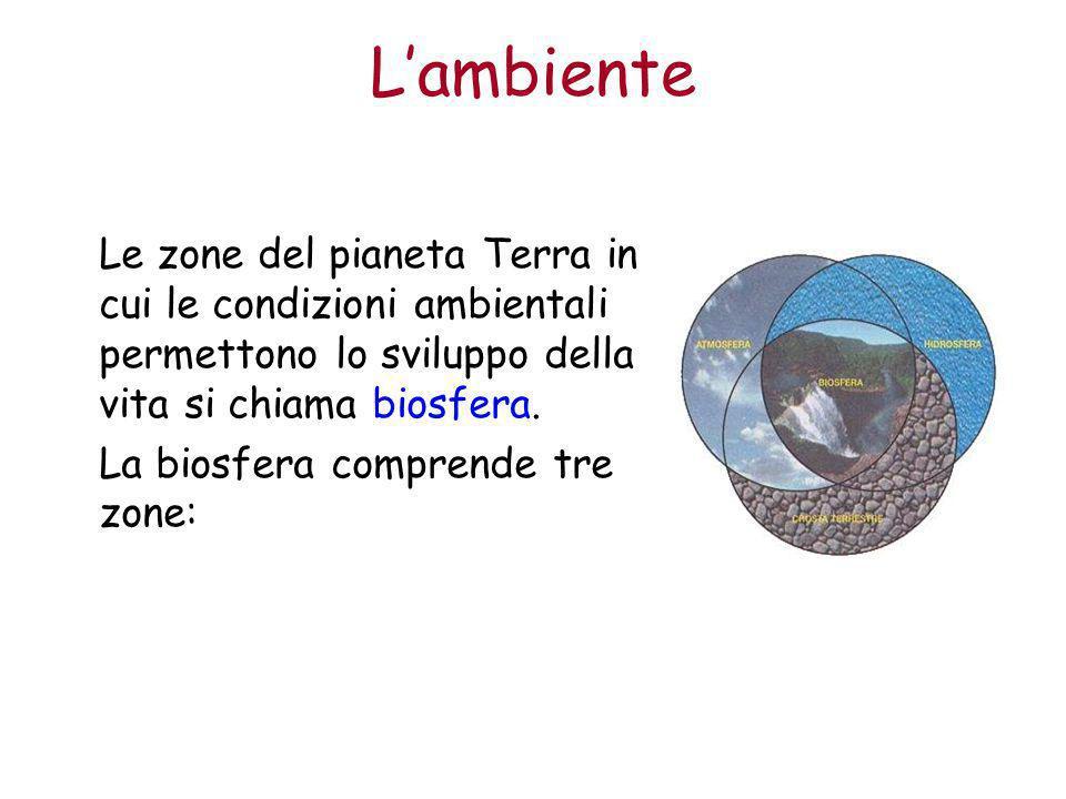 L'ambiente Litosfera: la superficie terrestre e il sottosuolo fino a poche decine di metri di profondità.