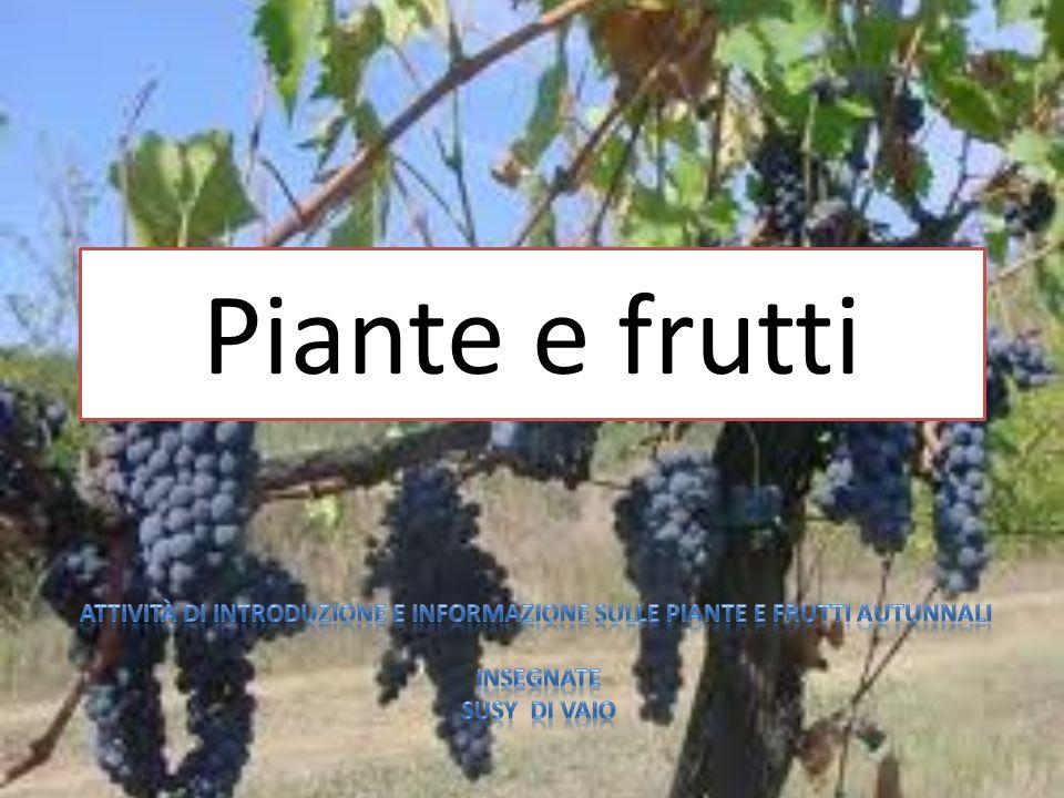 Piante e frutti