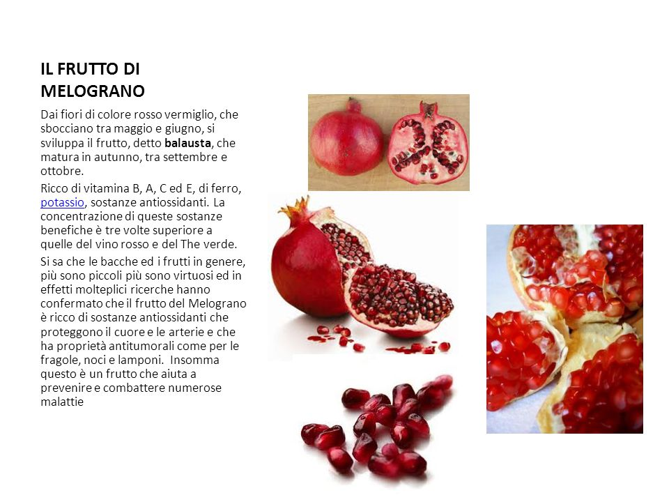 IL FRUTTO DI MELOGRANO Dai fiori di colore rosso vermiglio, che sbocciano tra maggio e giugno, si sviluppa il frutto, detto balausta, che matura in au