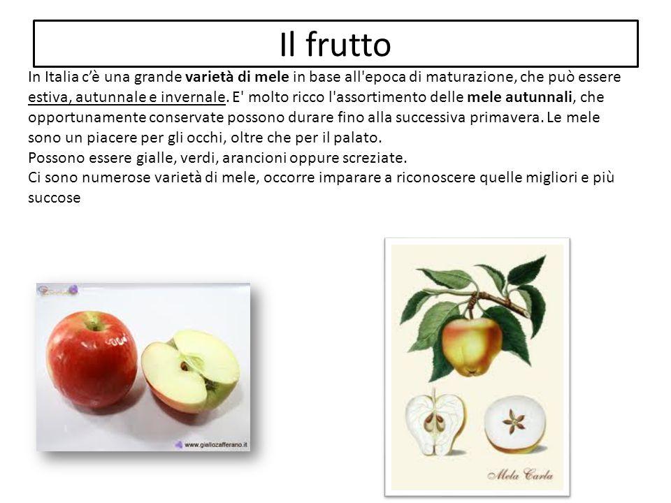 Il frutto In Italia c'è una grande varietà di mele in base all'epoca di maturazione, che può essere estiva, autunnale e invernale. E' molto ricco l'as