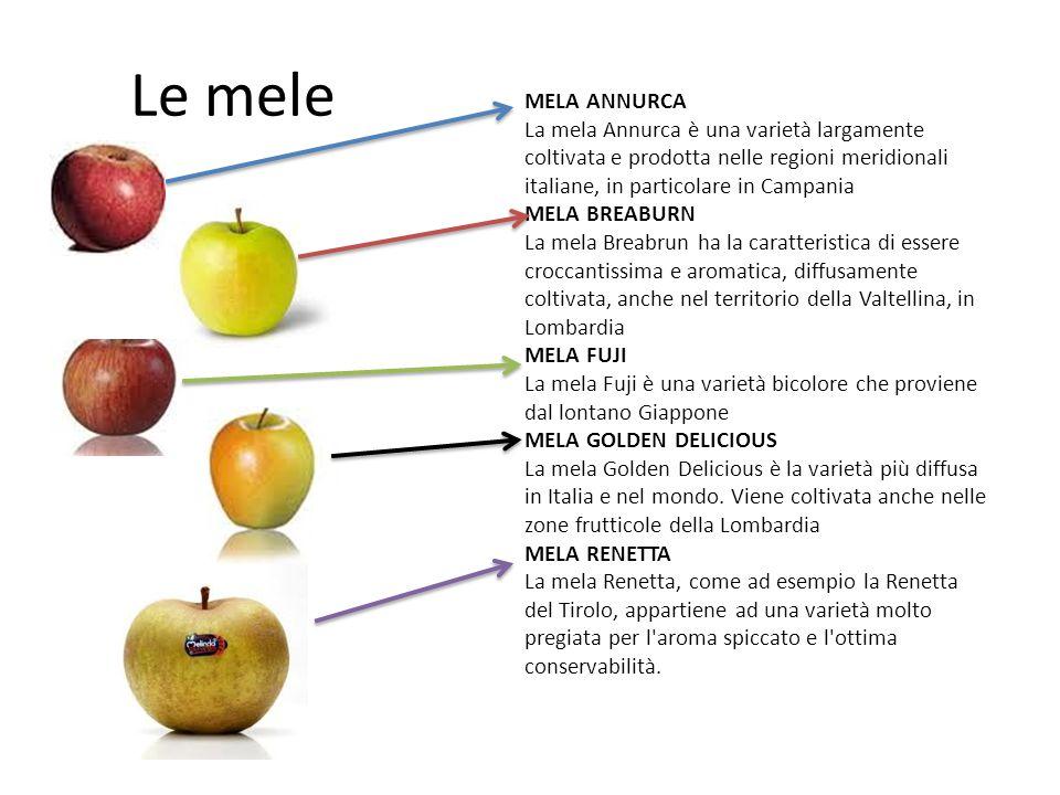 Le mele MELA ANNURCA La mela Annurca è una varietà largamente coltivata e prodotta nelle regioni meridionali italiane, in particolare in Campania MELA