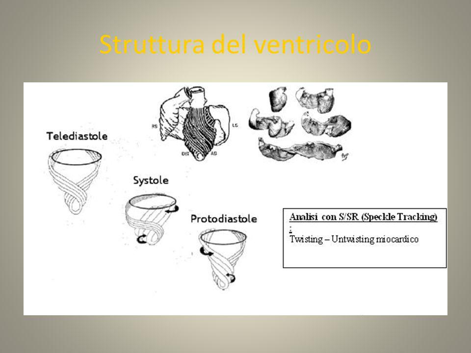 Struttura del ventricolo Torrent-Guasp F 1998