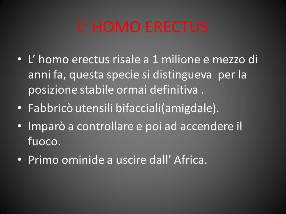 L' HOMO ERECTUS L' homo erectus risale a 1 milione e mezzo di anni fa, questa specie si distingueva per la posizione stabile ormai definitiva. Fabbric
