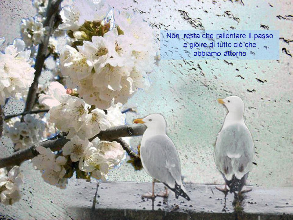 e, come sempre, dopo la pioggia, torna il sereno… scriverlo è banale perché il mese di Aprile e tutto ciò che reca in sé è espresso dalla natura, non