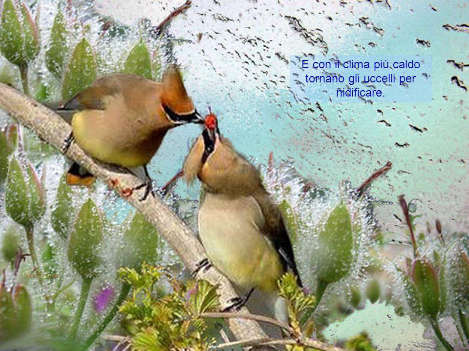 La bellezza non ha limiti, né confini, è in tutto il Creato
