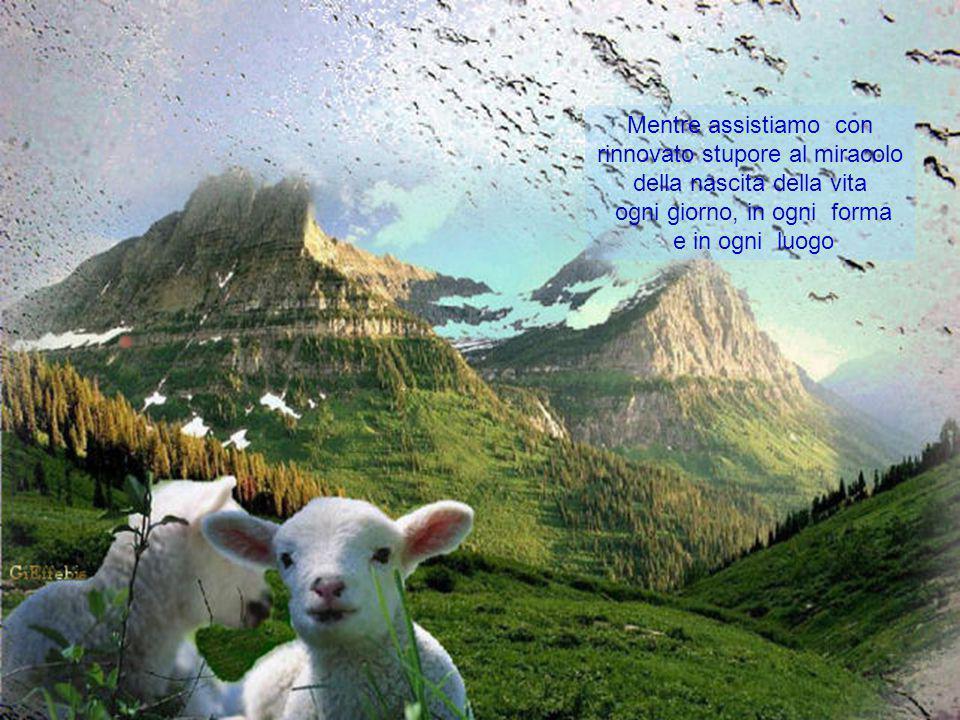Mentre assistiamo con rinnovato stupore al miracolo della nascita della vita ogni giorno, in ogni forma e in ogni luogo