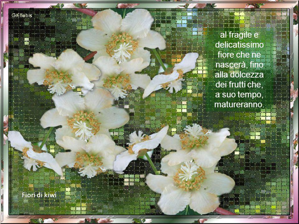 Fiori di kiwi al fragile e delicatissimo fiore che ne nascerà, fino alla dolcezza dei frutti che, a suo tempo, matureranno.