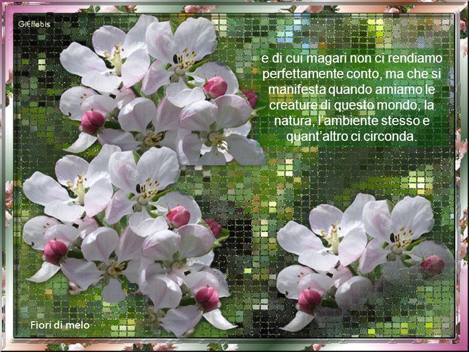 Fiori di fragola Ma c'è anche in ognuno di noi un po' di primavera, racchiusa in quel piccolo giardino interiore in cui coltiviamo il bene