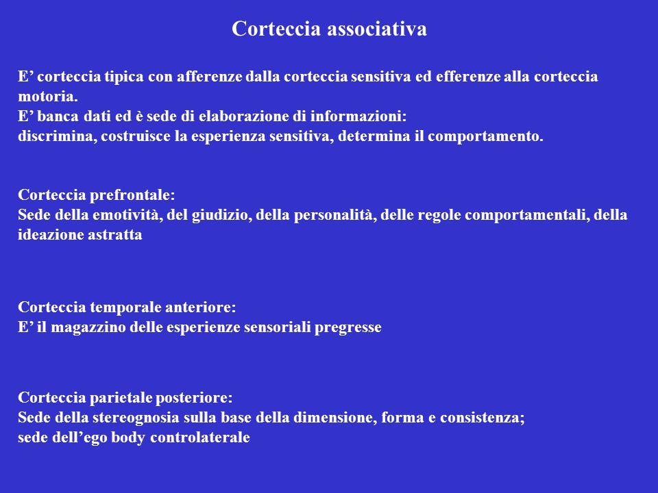 Corteccia associativa E' corteccia tipica con afferenze dalla corteccia sensitiva ed efferenze alla corteccia motoria.