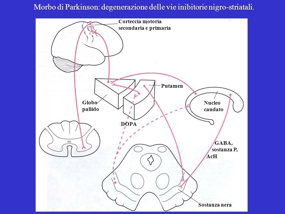 Corteccia motoria secondaria e primaria Globo pallido Putamen Sostanza nera GABA, sostanza P, AcH Nucleo caudato DOPA Morbo di Parkinson: degenerazione delle vie inibitorie nigro-striatali.
