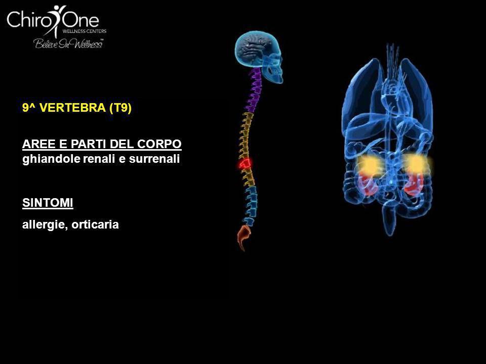 10^ VERTEBRA (T10) AREE E PARTI DEL CORPO reni SINTOMI problemi ai reni, irrigidimento arterioso, stanchezza cronica, nefrite, pielite
