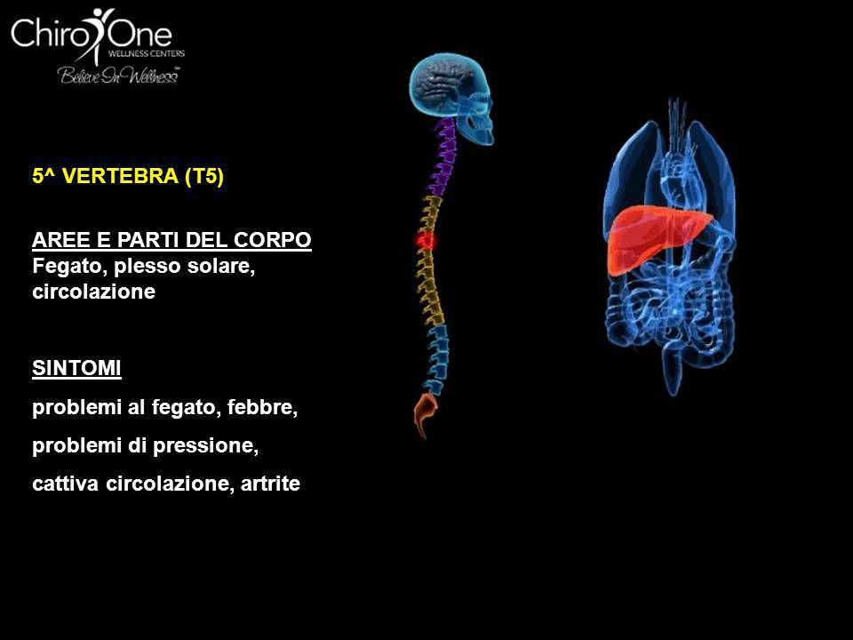6^ VERTEBRA (T6) AREE E PARTI DEL CORPO stomaco SINTOMI problemi allo stomaco, stomaco nervoso, indigestione, dispepsia e bruciore di stomaco