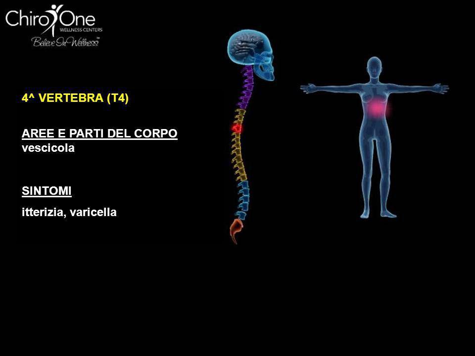 5^ VERTEBRA (T5) AREE E PARTI DEL CORPO Fegato, plesso solare, circolazione SINTOMI problemi al fegato, febbre, problemi di pressione, cattiva circola