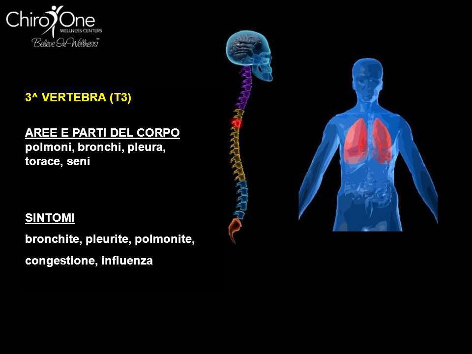 4^ VERTEBRA (T4) AREE E PARTI DEL CORPO vescicola SINTOMI itterizia, varicella