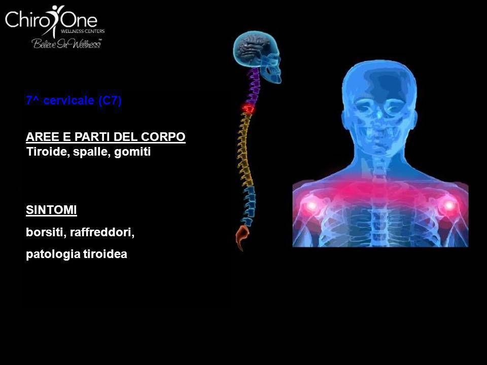 1^ VERTEBRA (T1) AREE E PARTI DEL CORPO braccia, dal gomito in giù, incluso mani polsi e dita, esofago e trachea SINTOMI asma, tosse, difficoltà respi