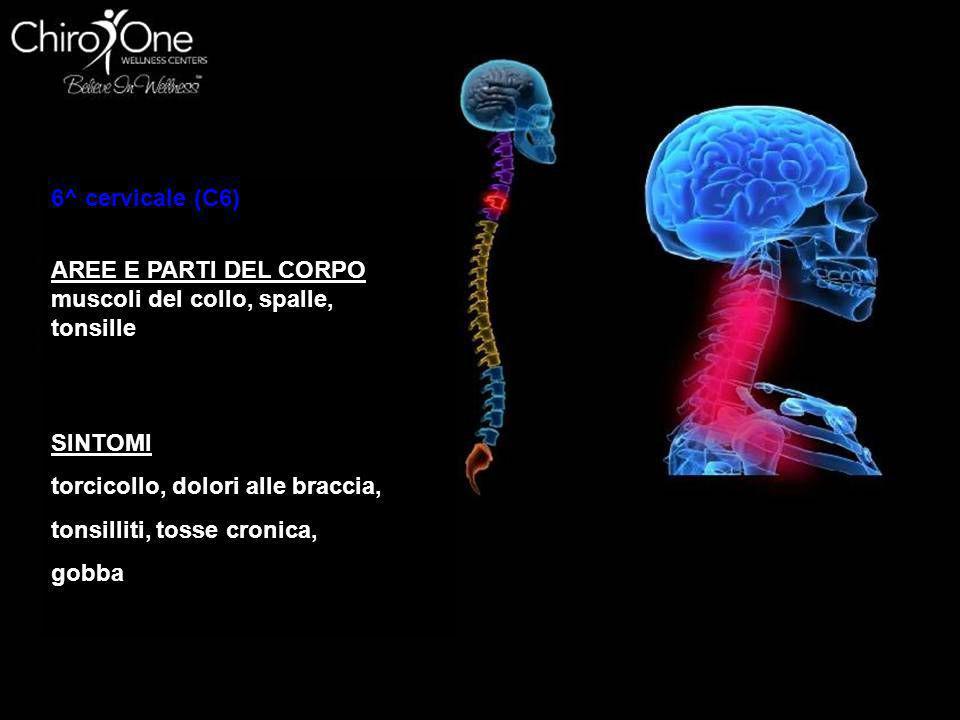 7^ cervicale (C7) AREE E PARTI DEL CORPO Tiroide, spalle, gomiti SINTOMI borsiti, raffreddori, patologia tiroidea