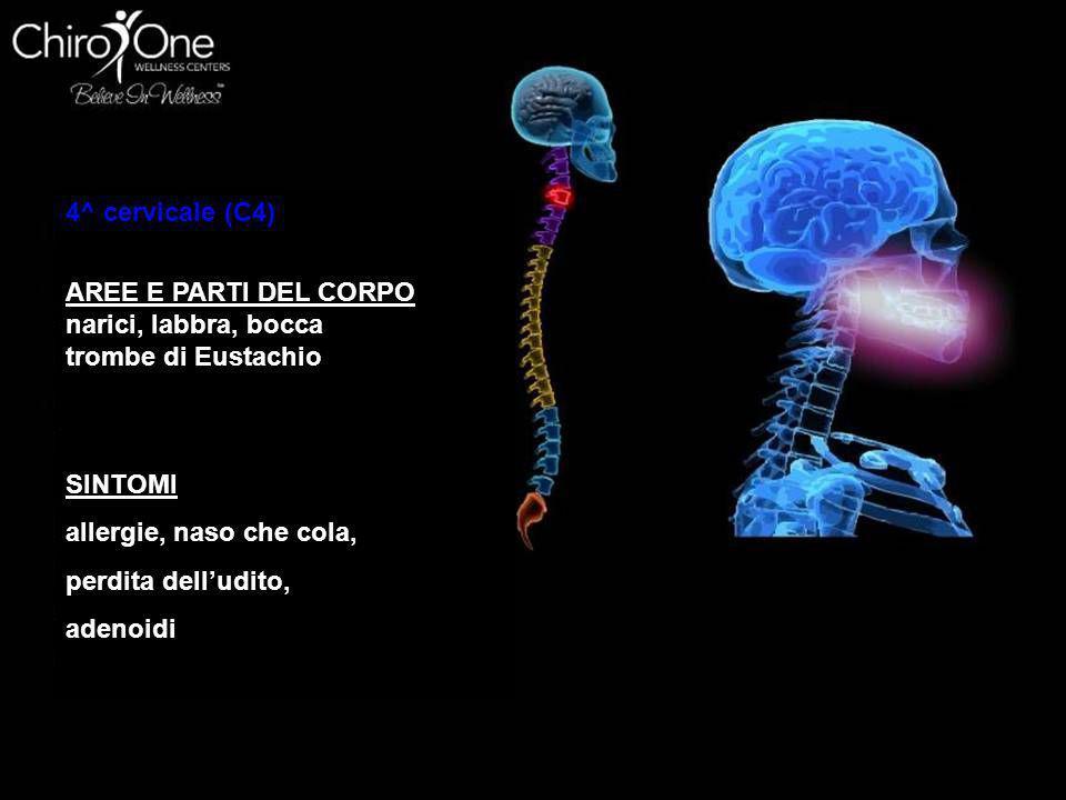 5^ cervicale (C5) AREE E PARTI DEL CORPO Corde vocali, ghiandole del collo, Laringe, SINTOMI laringite, raucedine, Condizioni della gola