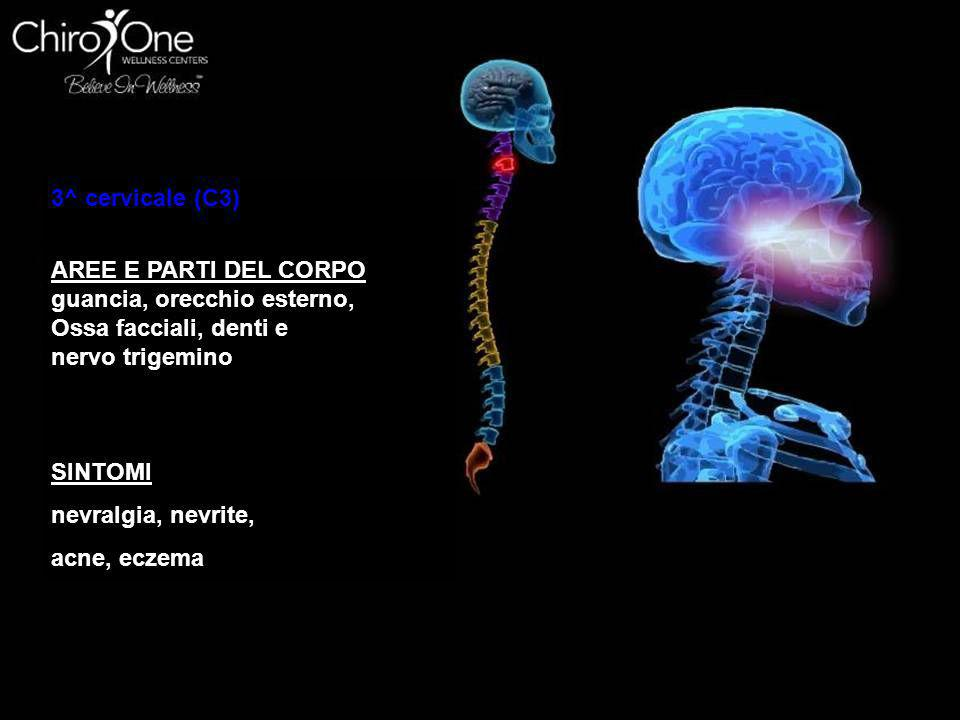 4^ cervicale (C4) AREE E PARTI DEL CORPO narici, labbra, bocca trombe di Eustachio SINTOMI allergie, naso che cola, perdita dell'udito, adenoidi