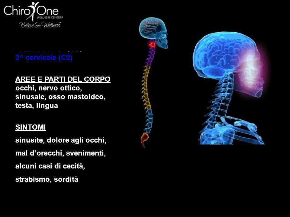 3^ cervicale (C3) AREE E PARTI DEL CORPO guancia, orecchio esterno, Ossa facciali, denti e nervo trigemino SINTOMI nevralgia, nevrite, acne, eczema