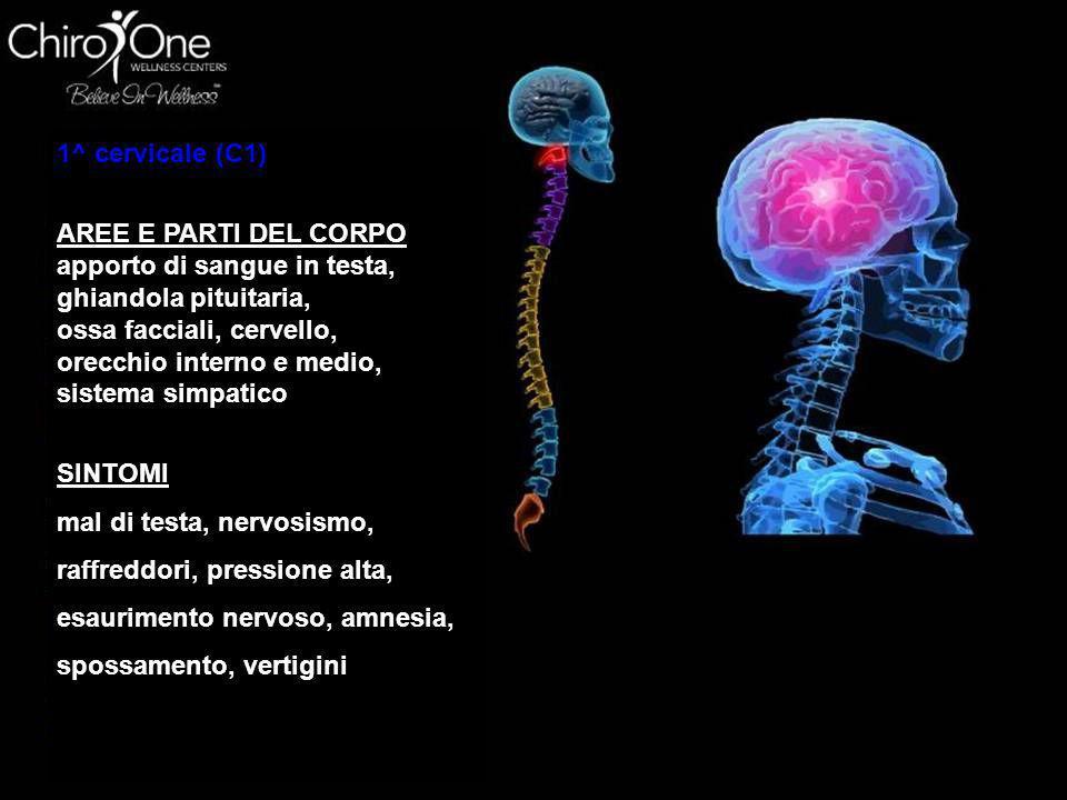 2^ cervicale (C2) AREE E PARTI DEL CORPO occhi, nervo ottico, sinusale, osso mastoideo, testa, lingua SINTOMI sinusite, dolore agli occhi, mal d'orecc