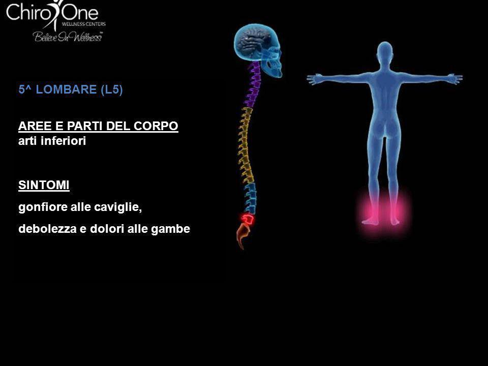 5^ LOMBARE (L5) AREE E PARTI DEL CORPO arti inferiori SINTOMI gonfiore alle caviglie, debolezza e dolori alle gambe