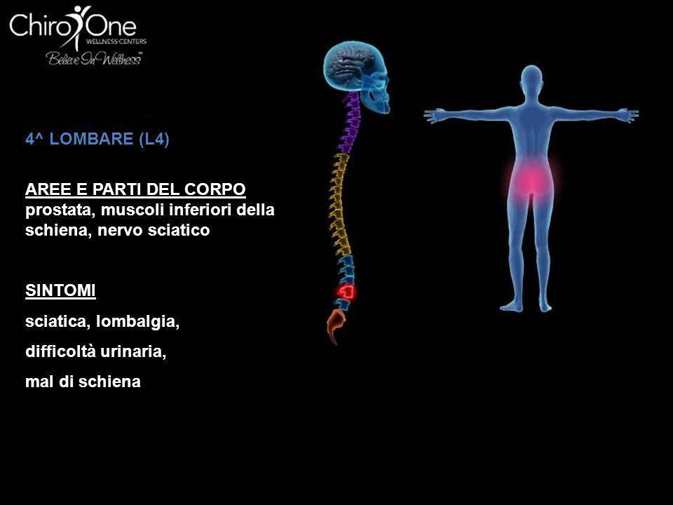 4^ LOMBARE (L4) AREE E PARTI DEL CORPO prostata, muscoli inferiori della schiena, nervo sciatico SINTOMI sciatica, lombalgia, difficoltà urinaria, mal di schiena