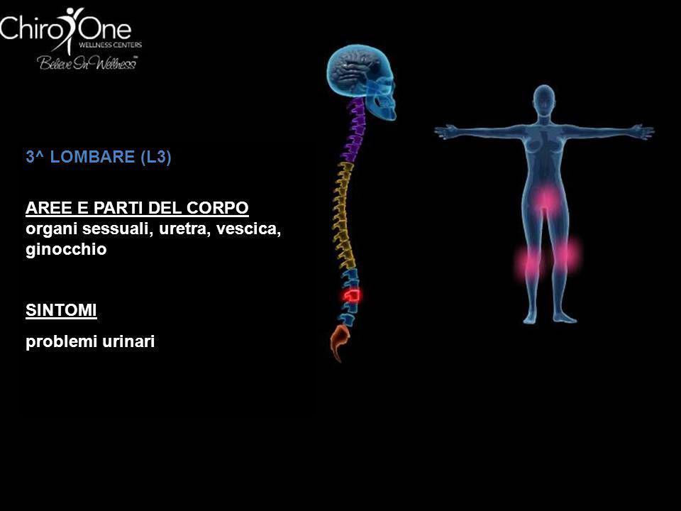 4^ LOMBARE (L4) AREE E PARTI DEL CORPO prostata, muscoli inferiori della schiena, nervo sciatico SINTOMI sciatica, lombalgia, difficoltà urinaria, mal