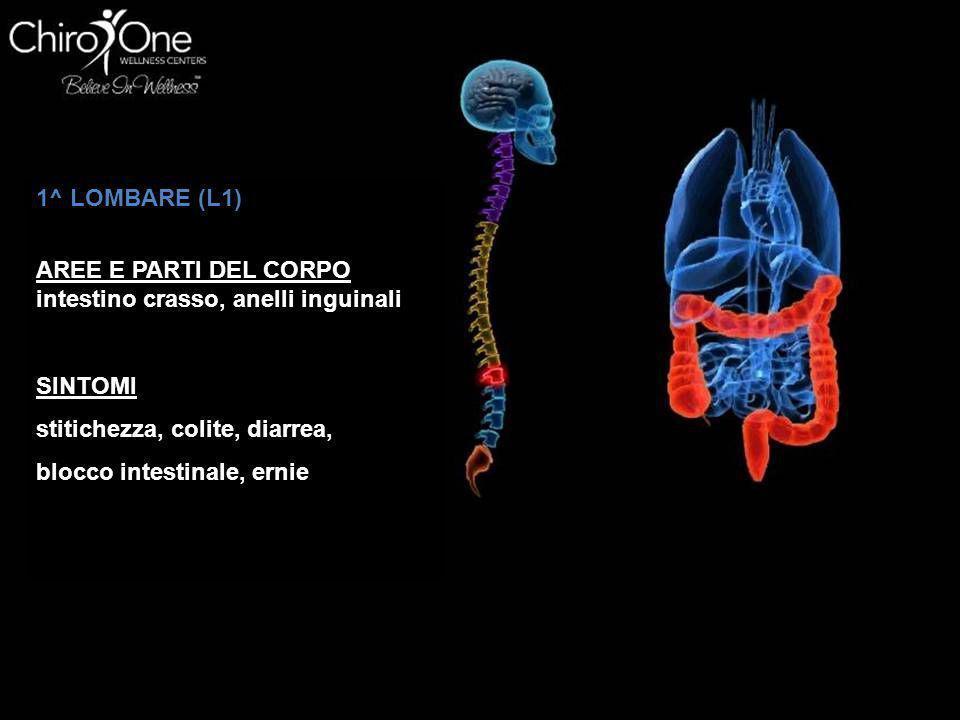 1^ LOMBARE (L1) AREE E PARTI DEL CORPO intestino crasso, anelli inguinali SINTOMI stitichezza, colite, diarrea, blocco intestinale, ernie