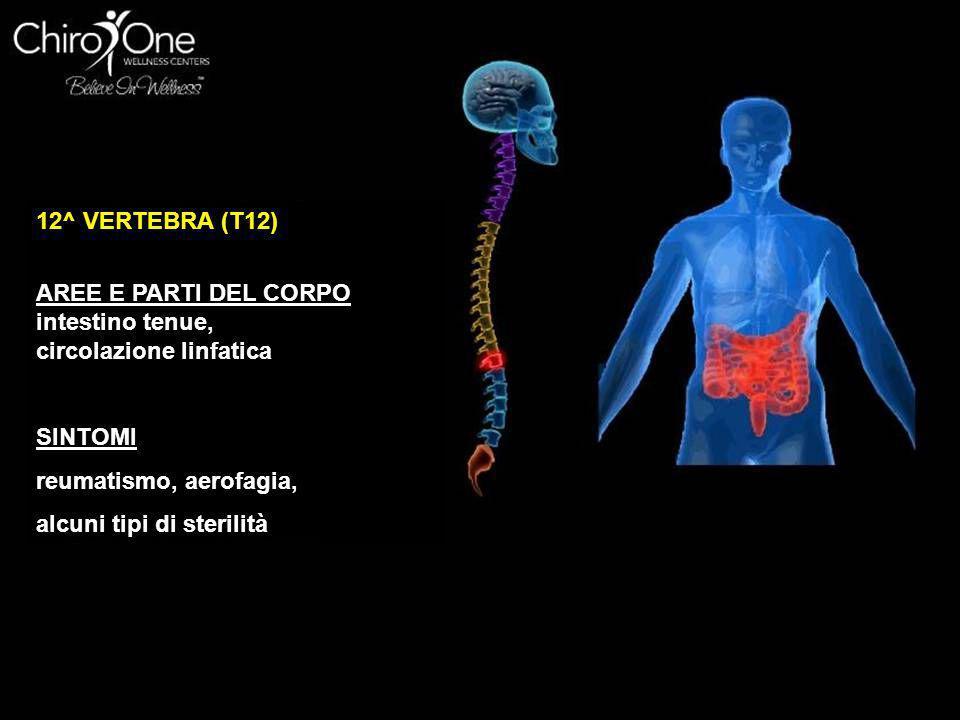 12^ VERTEBRA (T12) AREE E PARTI DEL CORPO intestino tenue, circolazione linfatica SINTOMI reumatismo, aerofagia, alcuni tipi di sterilità