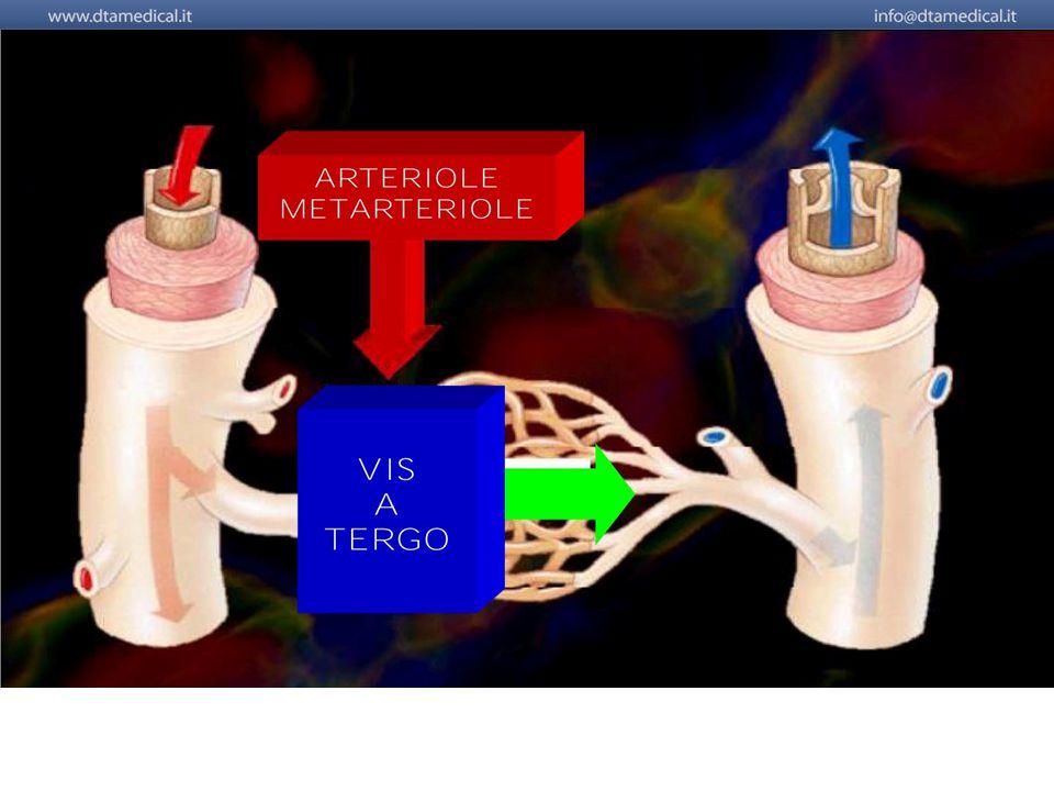 """Agendo sulla vis a tergo della microcircolazione, sul """"cuore"""" della microcircolazione, cioè, a livello arteriolare e metarteriolare, determinando una"""