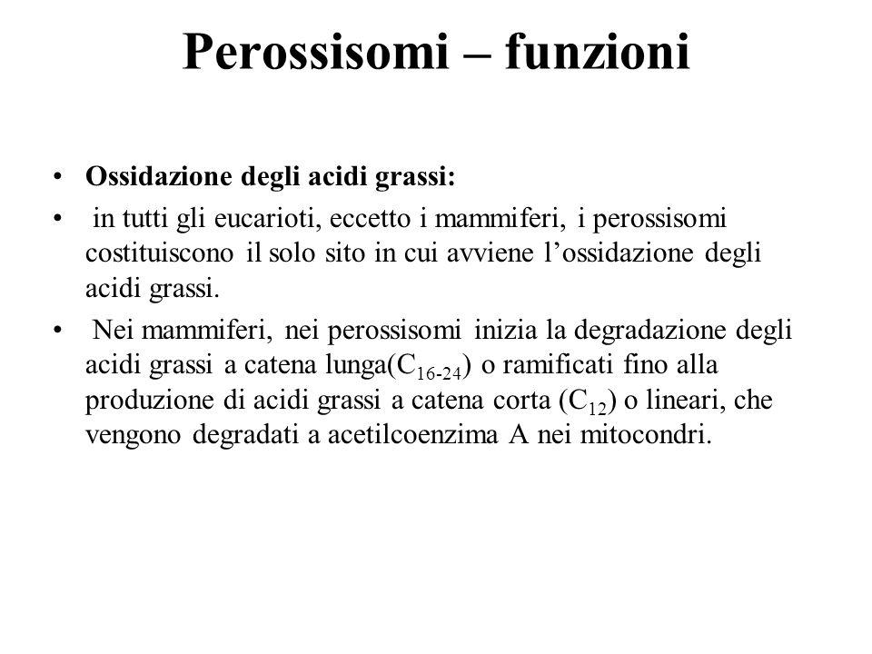 Perossisomi – funzioni Ossidazione degli acidi grassi: in tutti gli eucarioti, eccetto i mammiferi, i perossisomi costituiscono il solo sito in cui av