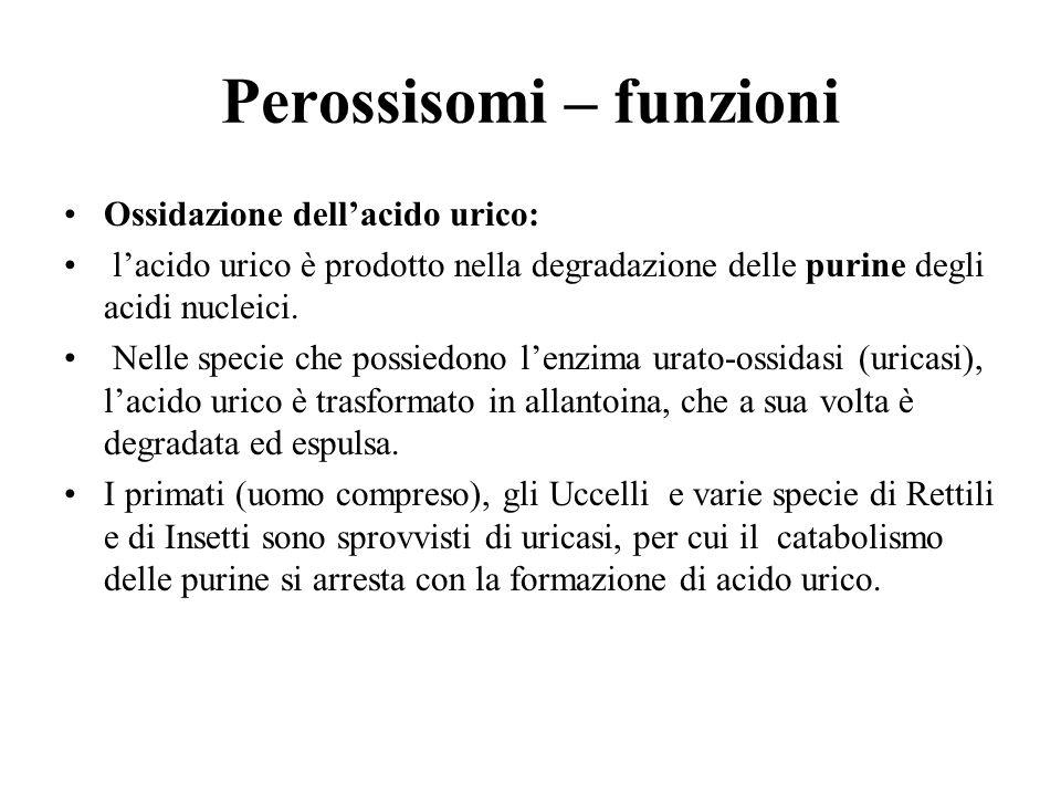 Perossisomi – funzioni Ossidazione dell'acido urico: l'acido urico è prodotto nella degradazione delle purine degli acidi nucleici. Nelle specie che p