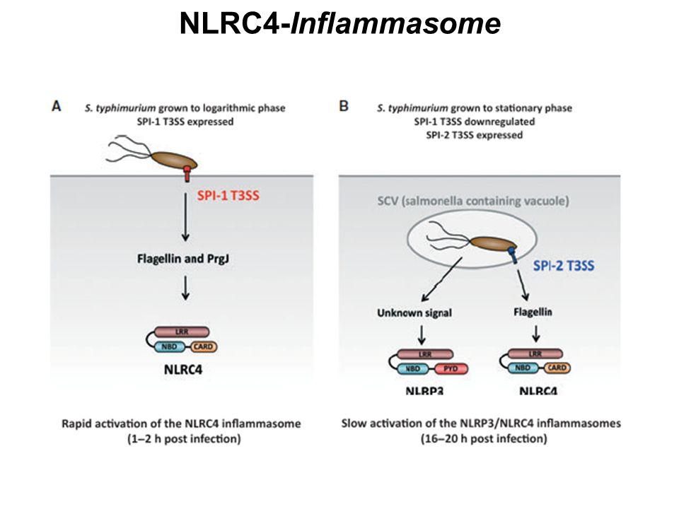 NLRC4-Inflammasome